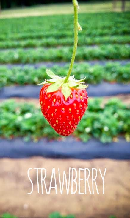 Strawberries | My Name Is Snickerdoodle